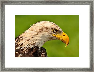 Lord Of The Wings Framed Print