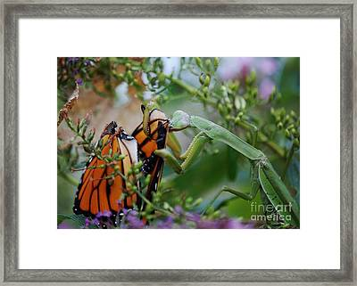 Losing The Wings Framed Print by Joy Bradley