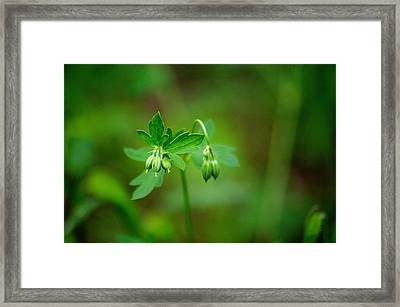Framed Print featuring the photograph Lost But Not Forgotten by Vicki Pelham