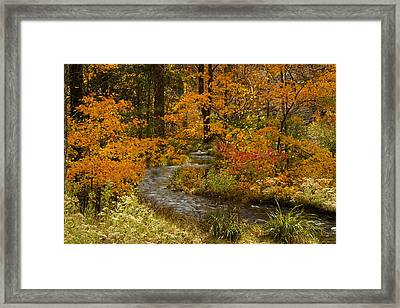 Lost Creek At Beavers Bend Framed Print