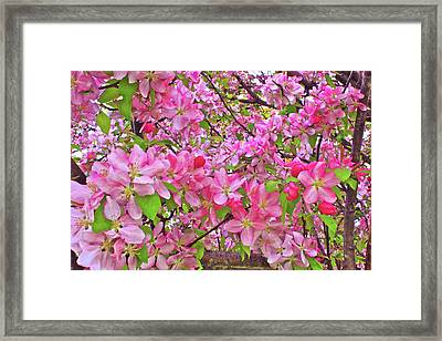 Lost In The Blossoms  Framed Print