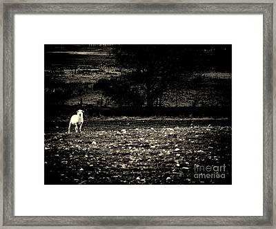 Lost Lamb Framed Print