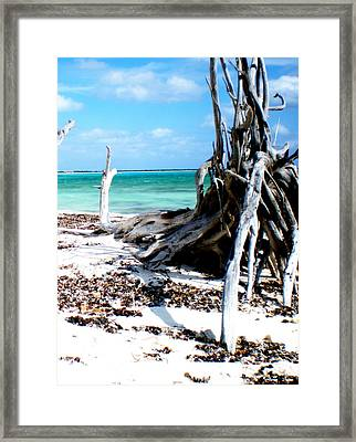 Cozumel Mexico  Paradise On Earth Framed Print by Danielle  Parent