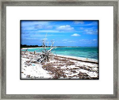 Framed Print featuring the photograph Lost Paradise The Sequel 2 by Danielle  Parent