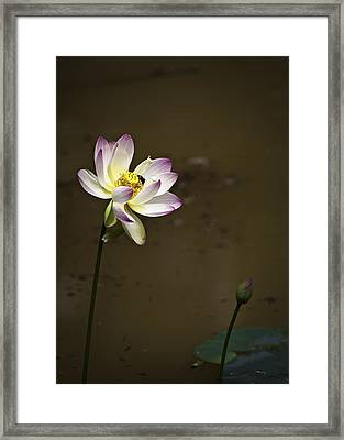 Lotus And Friend Framed Print by Rob Travis