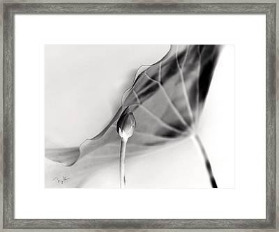 Lotus Bud Framed Print by Nian Chen