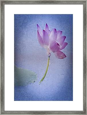Lotus Dream Framed Print by Jill Balsam