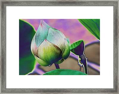 Lotus Dreaming 7 Framed Print