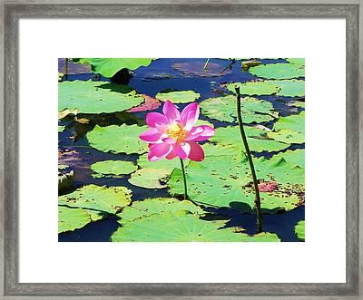 Lotus Flower Framed Print by Jarrod Faranda