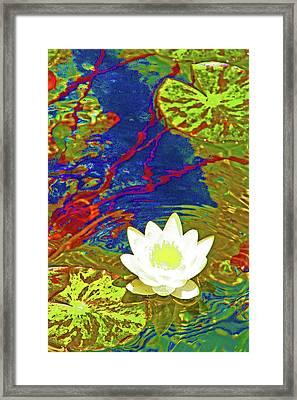 Lotus Framed Print by James Mancini Heath