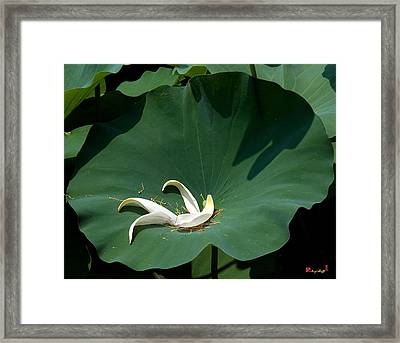 Lotus Leaf--castoff IIi Dl060 Framed Print by Gerry Gantt