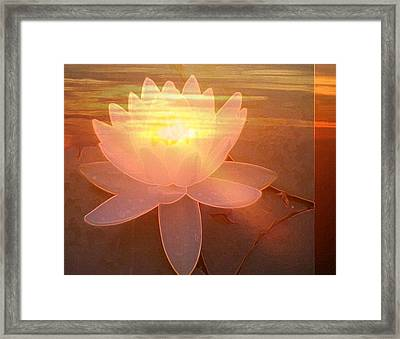 Lotus Light Framed Print