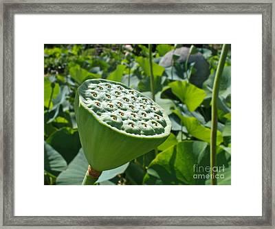 Lotus Lily - Stamen Framed Print by Kaye Menner