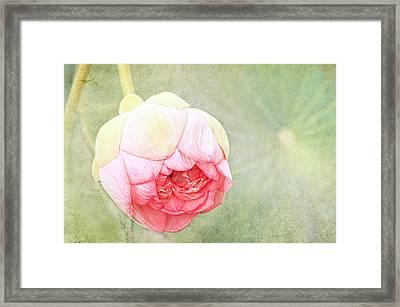 Lotus Framed Print by Margaret Hormann Bfa