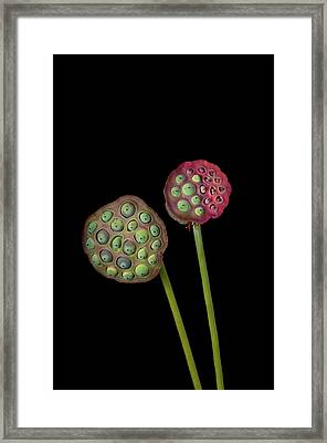 Lotus Seed Pod Framed Print