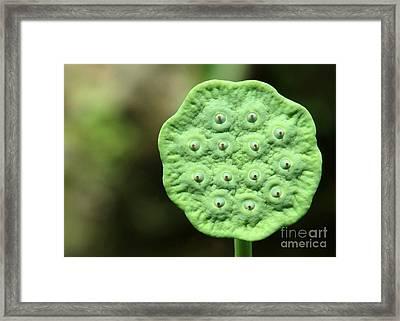 Lotus Seeds Framed Print by Sabrina L Ryan