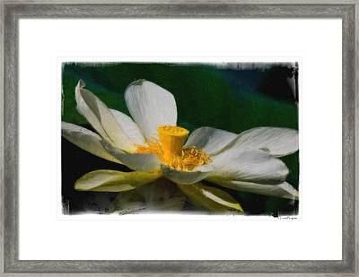 Framed Print featuring the photograph Lotus by Travis Burgess