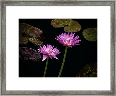Lotus Water Lilies Framed Print by Rudy Umans