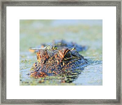 Framed Print featuring the photograph Louisiana Alligator With Dragon Fly by Luana K Perez