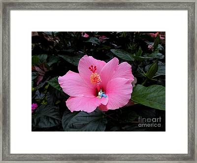 Lounging In A Hibiscus Framed Print by Renee Trenholm