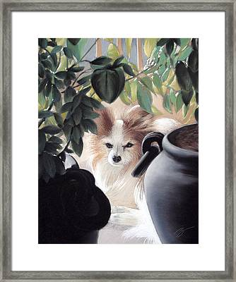 Lounging In The Sun Framed Print