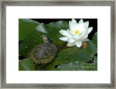 Lounging On A Lily Pad Framed Print