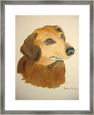 Framed Print featuring the painting Lovable Dachshund by Norm Starks