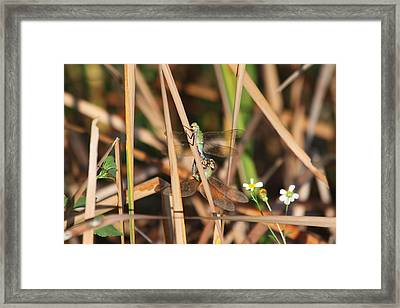 Framed Print featuring the photograph Love At First Site by Jeanne Andrews