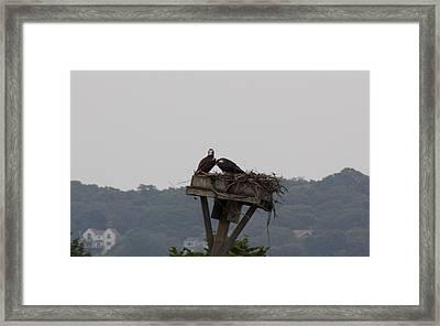 Love Birds Framed Print by Amy Holmes