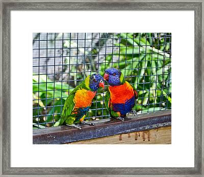 Love Birds Framed Print by Julio n Brenda JnB