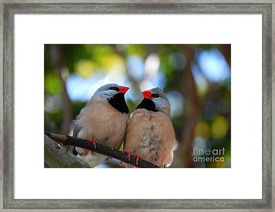 Framed Print featuring the photograph Love Birds by Linda Mesibov