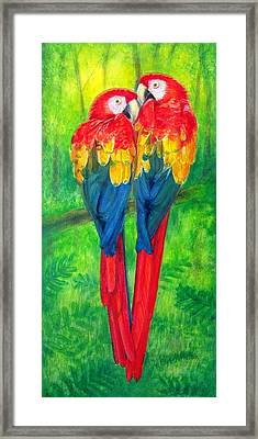 Love Birds- Macaw Parrots Framed Print