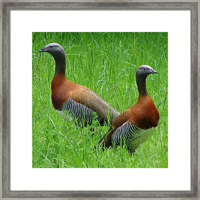 Framed Print featuring the photograph Love Birds by Ramona Johnston