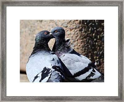 Love Birds Framed Print by Wingsdomain Art and Photography