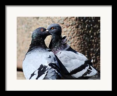 Pijuns Framed Prints
