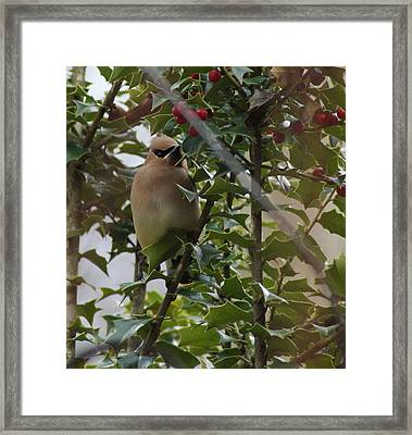 Love Holly Berries Framed Print