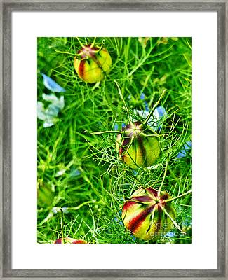 Framed Print featuring the photograph Love In A Mist by Steve Taylor