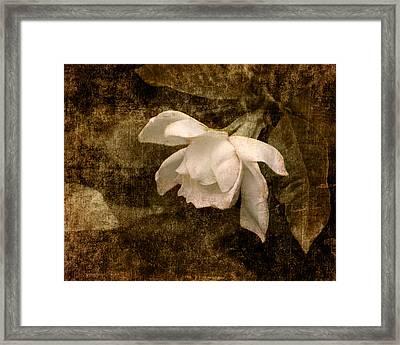 Love Letter Ix Cape Jasmine Gardenia Framed Print by Jai Johnson
