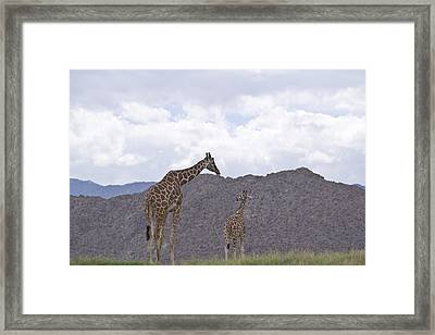 Love Framed Print by Molly Heng