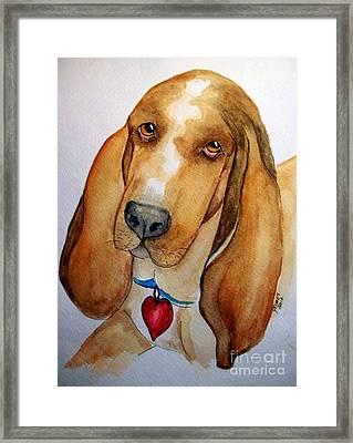 Love That Bassett Framed Print by Carol Grimes
