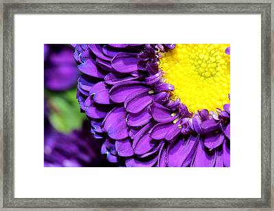 Love The Purple Flower Framed Print