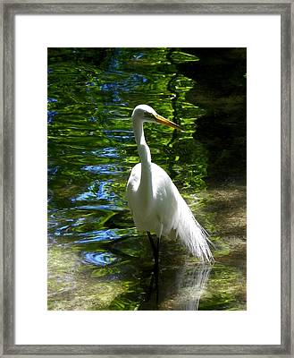 Lovely Bird Framed Print by Judy Wanamaker