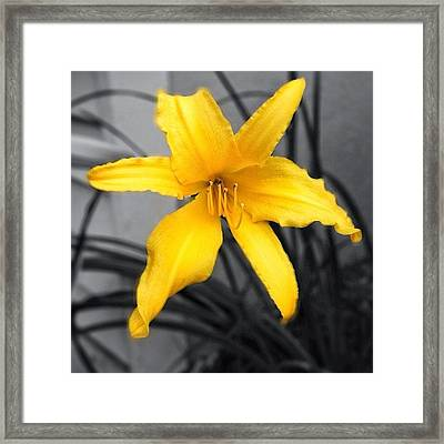 #lovely But #lone #lily Framed Print