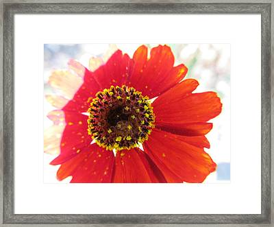 Framed Print featuring the photograph Lovely Effects by Tina M Wenger