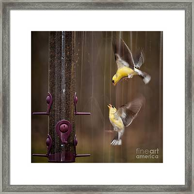 Lovely Fight Framed Print by Venura Herath