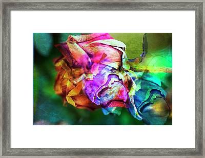 Lovely Lady Framed Print