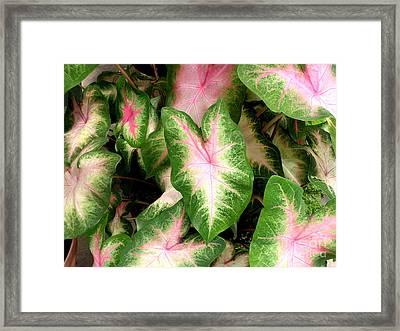 Lovely Leaves Framed Print by Byron Varvarigos