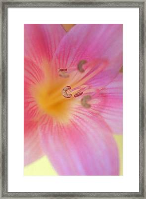 Lovely Lily Framed Print by Kathy Yates