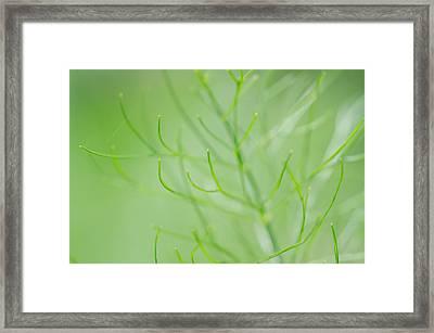 Lovely Little Lines Framed Print
