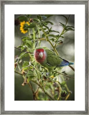 Lovely Little Lovebird Framed Print